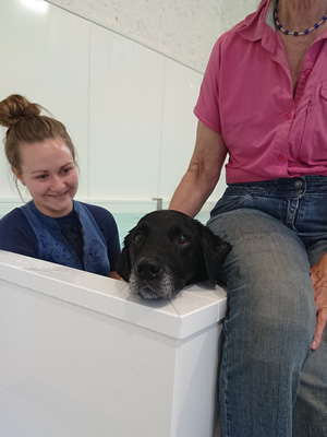 hydrotherapy for your dog at duchy canine hydrotherapy near liskeard, cornwall