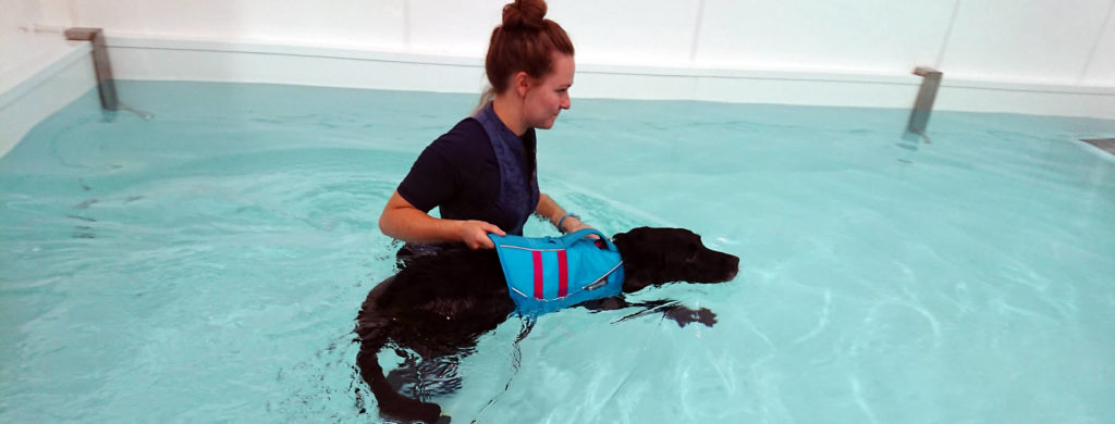 hydrotherapy for your dog at duchy canine hydrotherapy